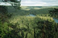 Kuusamon metsät