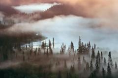 Fog in the wilderness