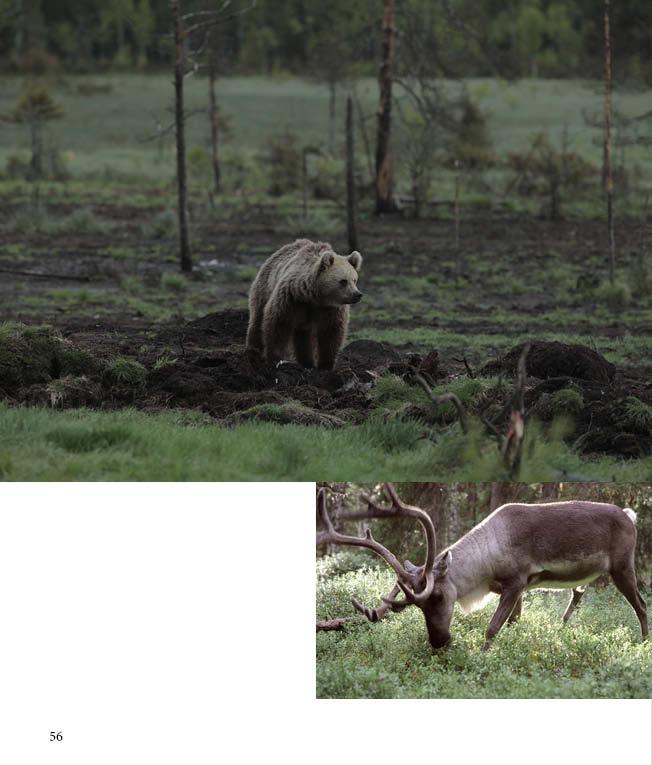 https://www.kitkajoki.fi/wordpress/wp-content/uploads/2017/10/Puhdasluonto-puhdasvesi-2017-10-56.jpg
